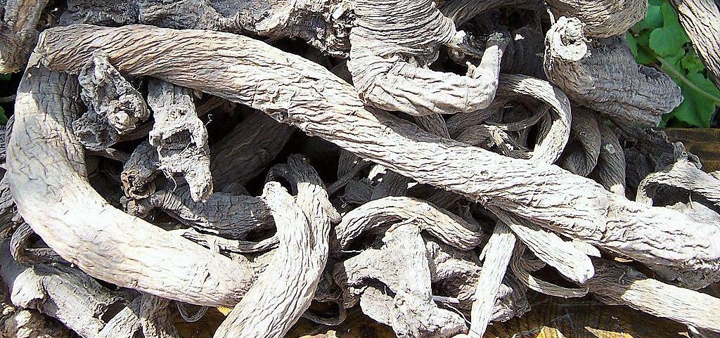 radice di genziana secche